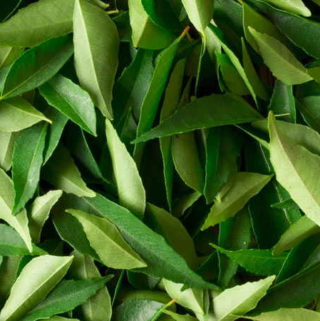 curry leaves substitute