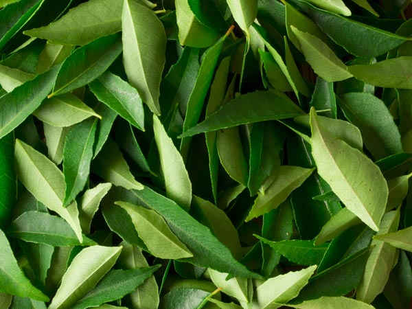 Curry Leaves Substitute – What to Use ?