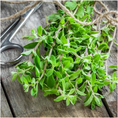 Marjoram Substitute – What to Use?
