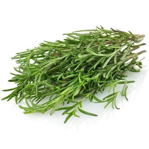 Rosemary Substitute – What to Use?
