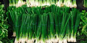 Scallions vs Green Onions