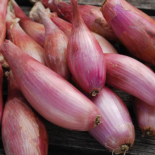 Scallions vs Shallots – What's the Difference?