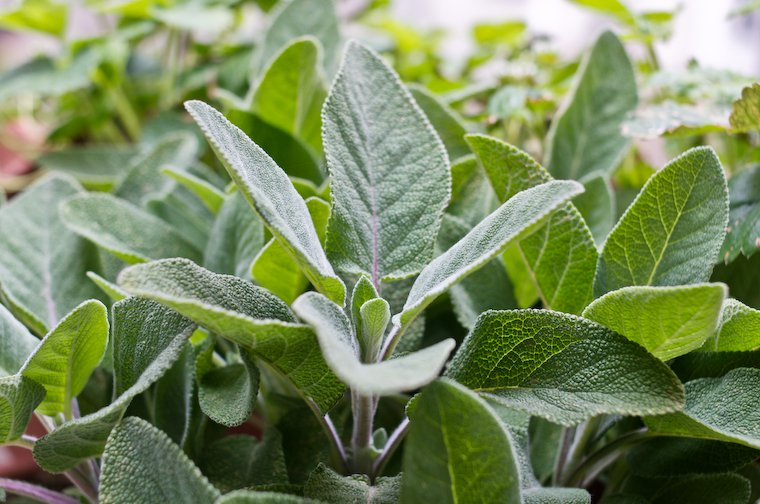 Substitute for Sage – What's Best?